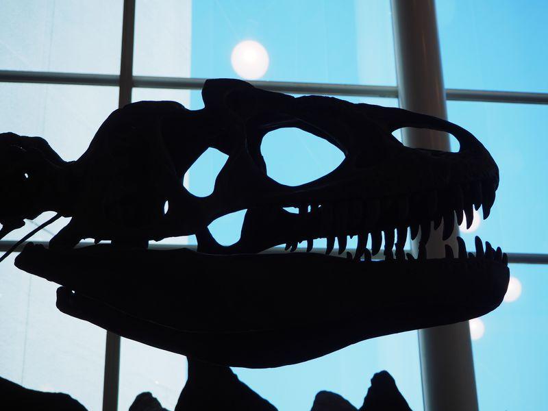 世界が注目するウマの化石も展示中「岐阜県博物館」