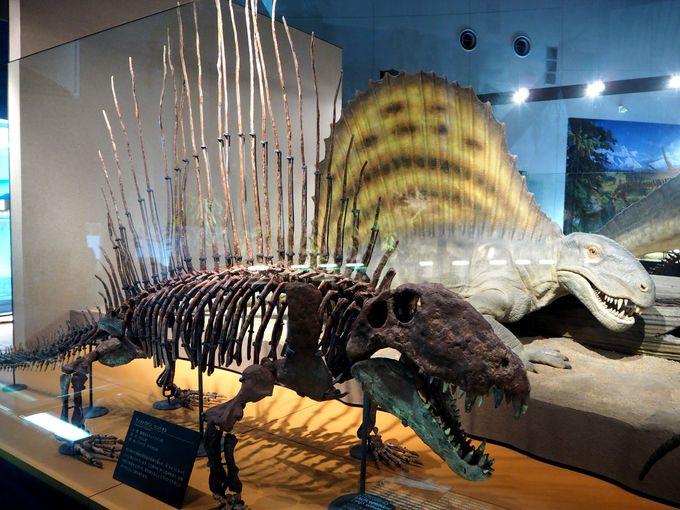 本物の化石とレプリカ(複製化石)の見分け方
