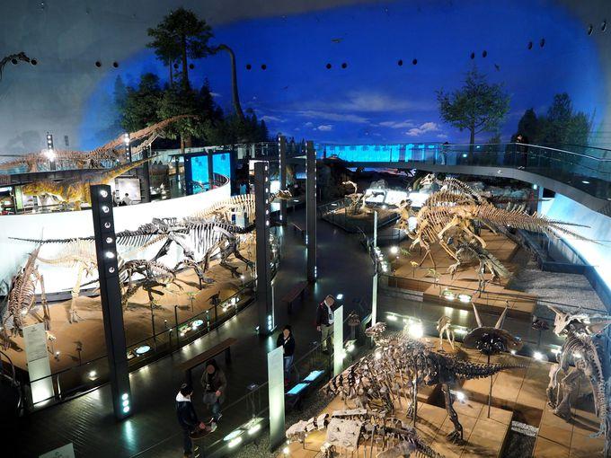とっても営業的な福井県立恐竜博物館!企画は全国へ