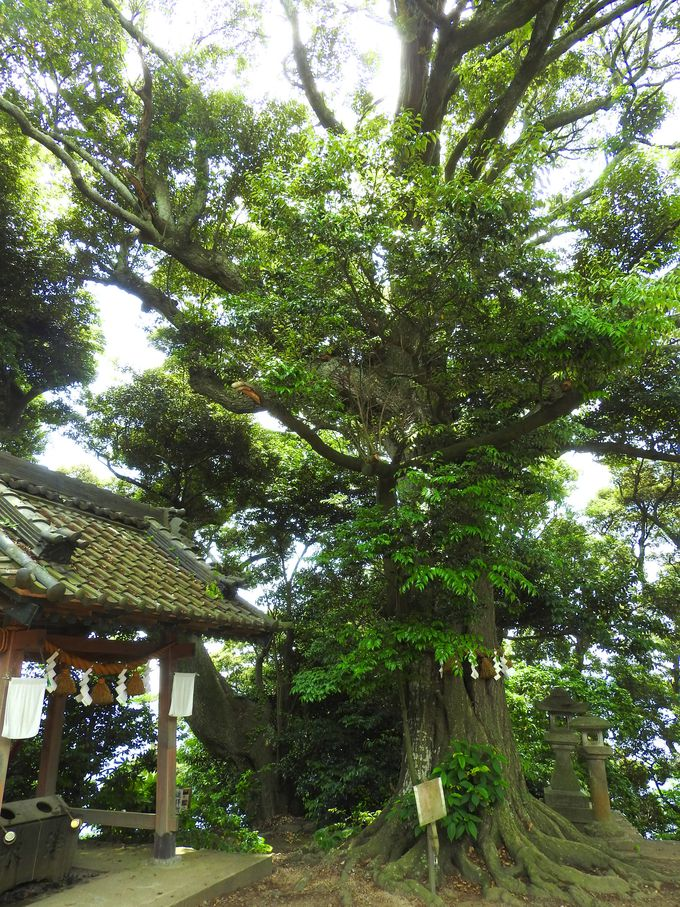頂上にある稲村神社
