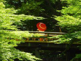 緑と滝と刀剣の名古屋「徳川園」と「徳川美術館」の歩き方