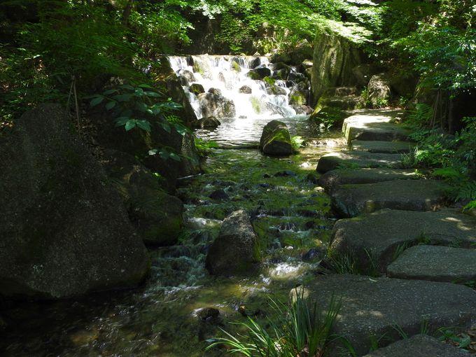 「大曾根の滝」まで渓谷を歩く