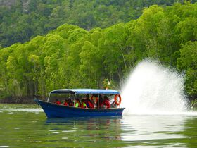 ランカウイ島のマングローブ湿地を巡るかっ飛びボートツアー!動物たちも次々登場