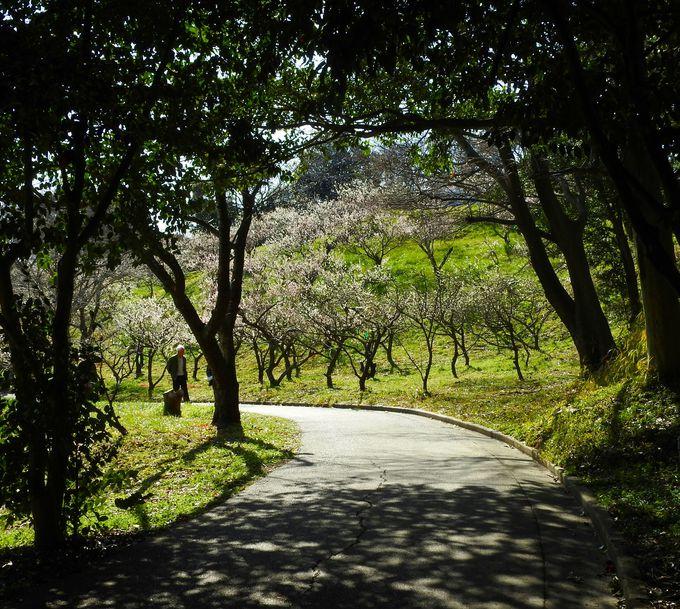 趣ある雑木林を抜けて散策しよう