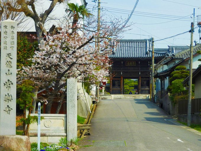 壮大な常楽寺は山門から松が迎えます