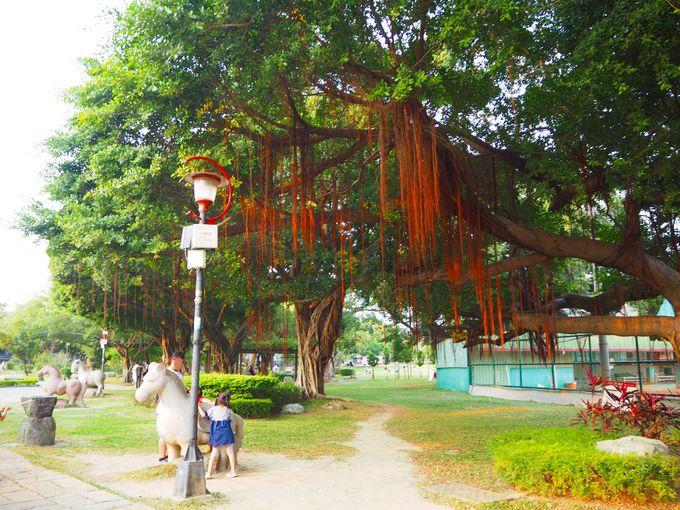 気根が垂れ下がる亜熱帯の巨木も楽しめます