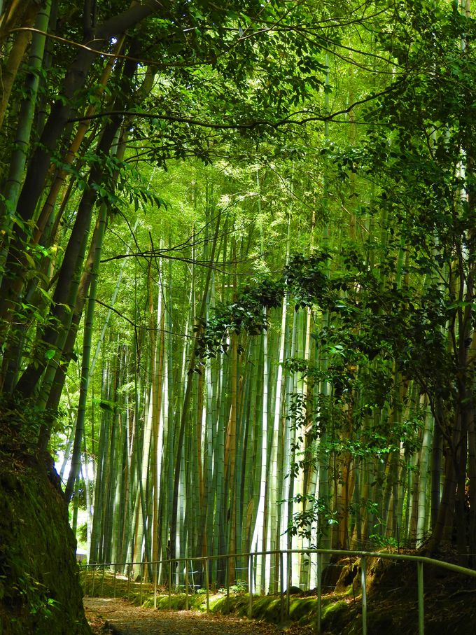 風の音を聞きたい竹林