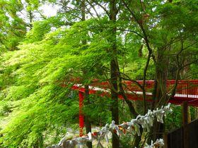 竹林が美しい愛知岡崎「真福寺」たけのこ尽くしの竹膳料理も