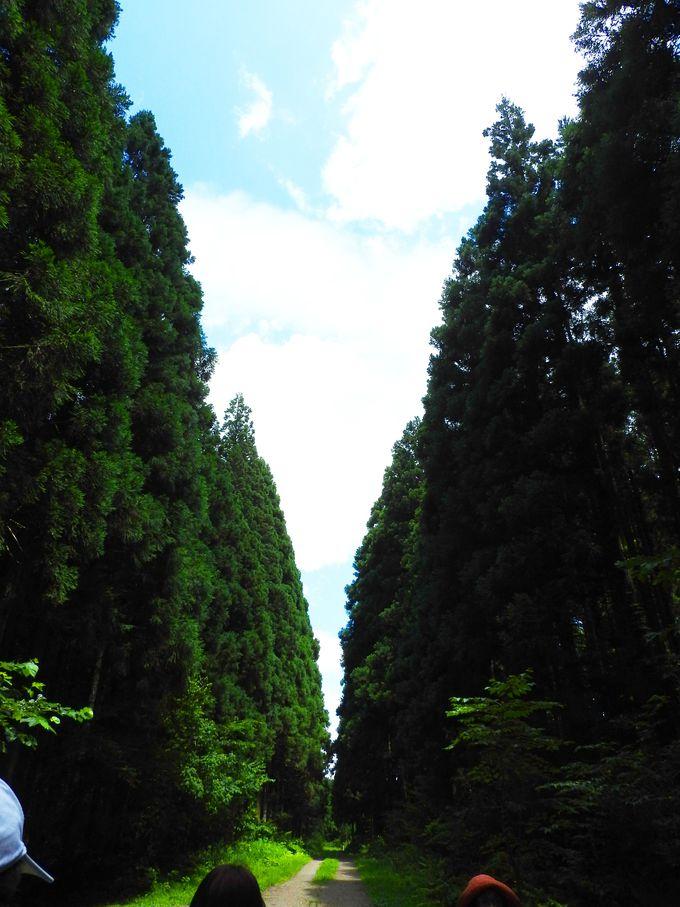 トラクター・トレインで行く自然満喫体験「小岩井100年の森ツアー」を楽しもう