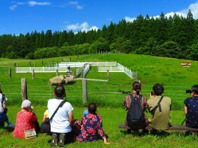 9.小岩井農場