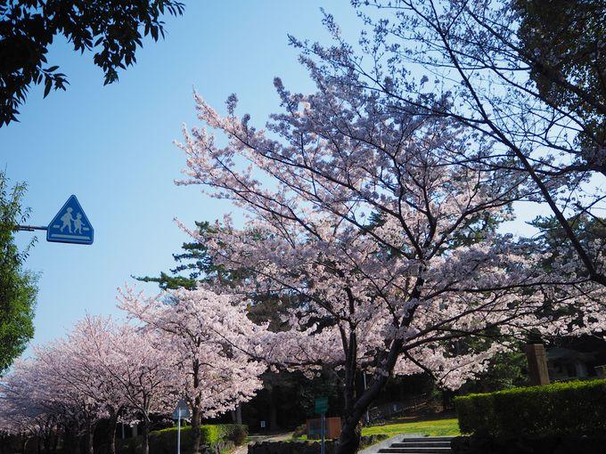 青成バスと南吉バスの春はココ!