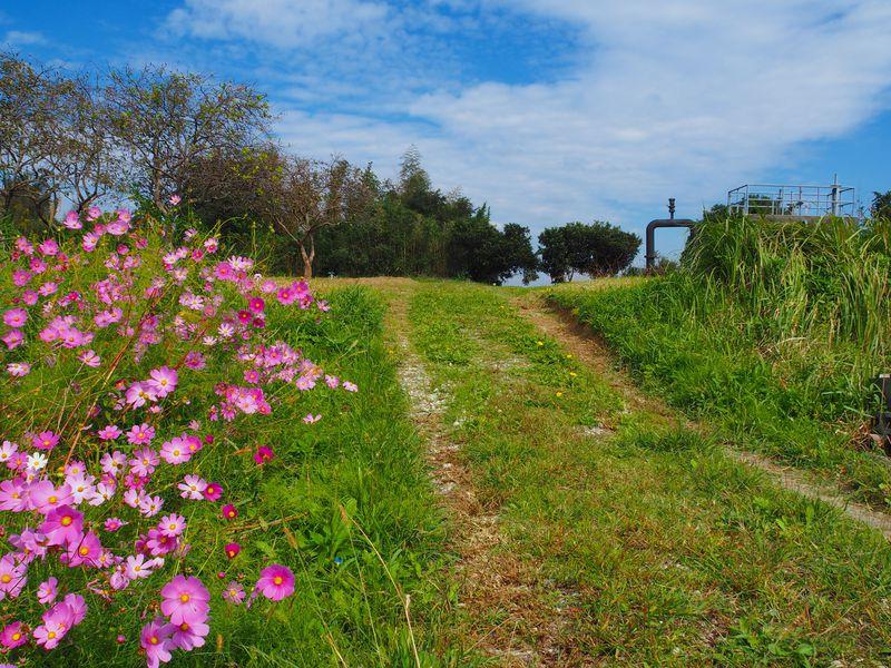 愛知半田観光に朗報!『ごんくる』バスでらくらく巡り、花見も!