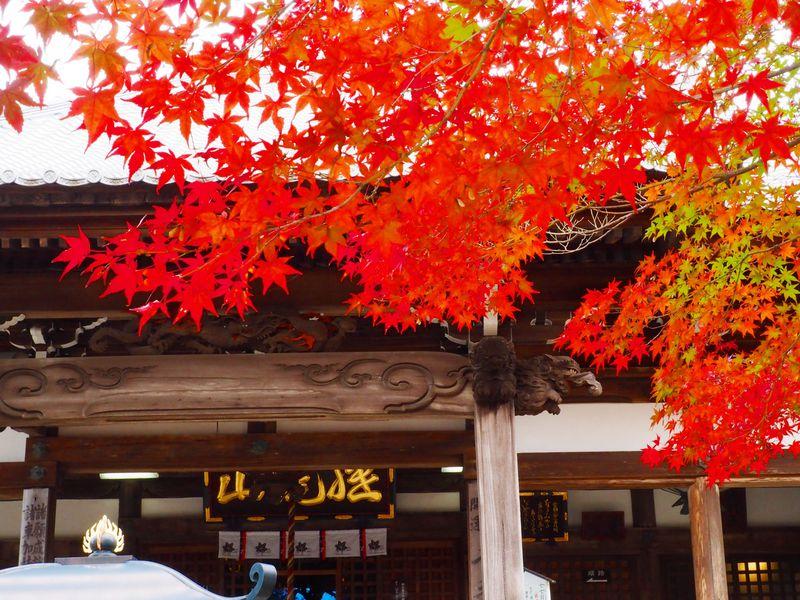 紅葉と絶景を堪能!愛知「犬山寂光院」をハイキング