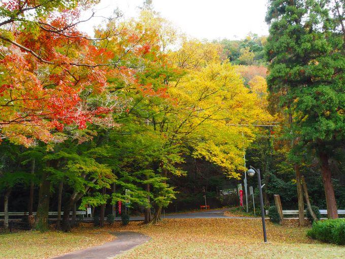 不老公園の紅葉と不老滝