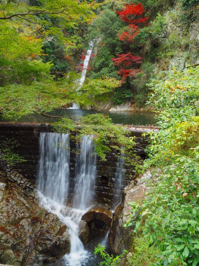 緑あふれる雌滝(めんたき)の森林浴