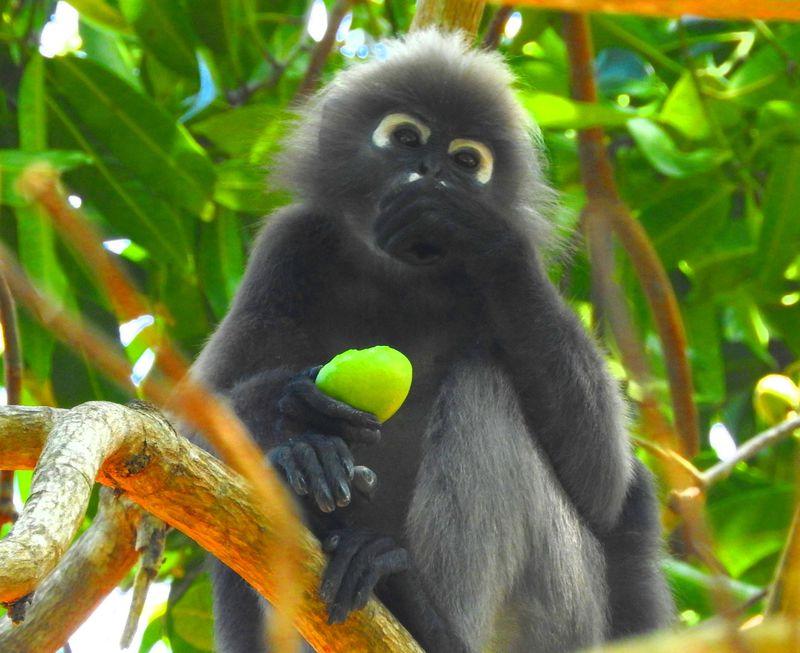 カワイイ動物と遭遇!マレーシア・ランカウイ島ジャングル・トレッキング