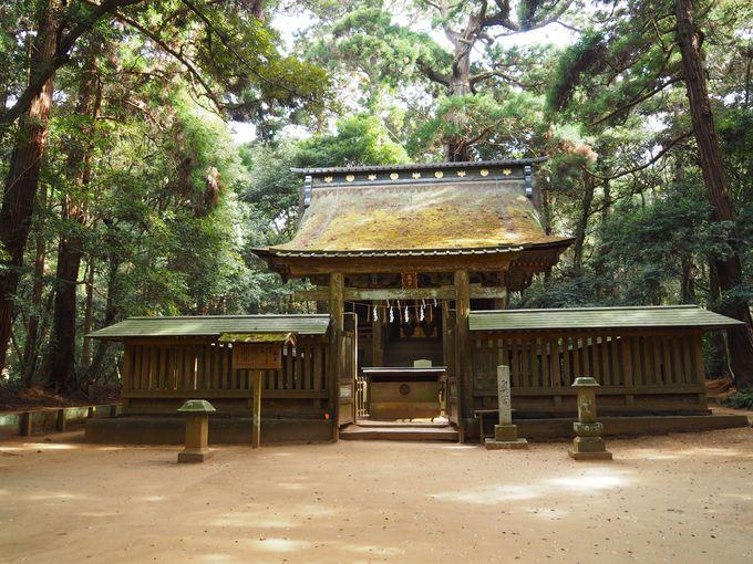 鹿島神宮の森、奥宮、御手洗池