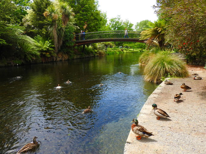 水鳥を眺めるなら、デッキ&ビクトリア湖周辺で