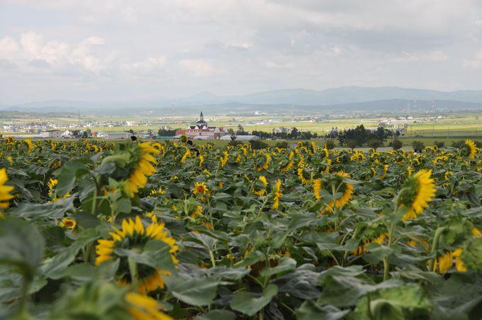 北海道の広大な景色を堪能しよう!