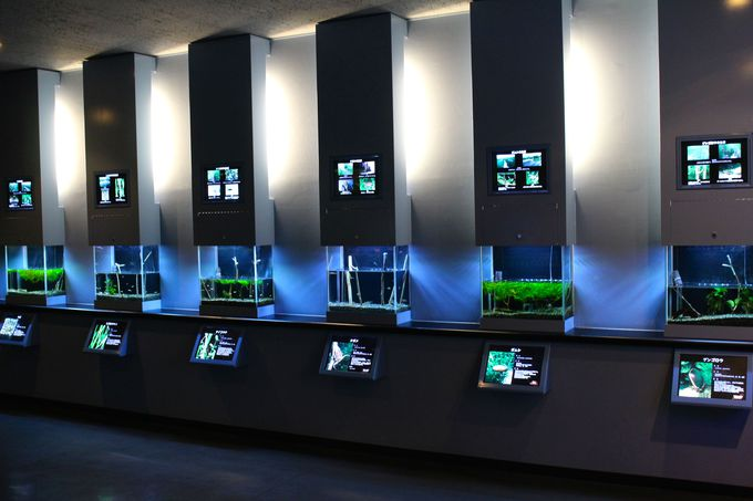 「淡水展示の水族館 10位」のこだわり