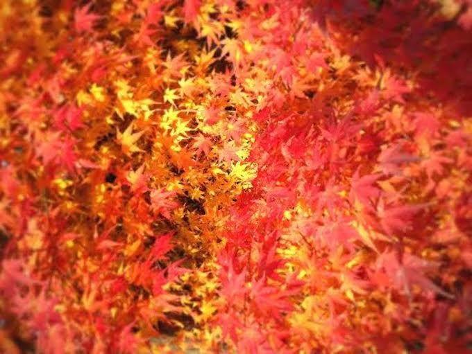 紅葉シーズンに足助城がオススメの理由とは?