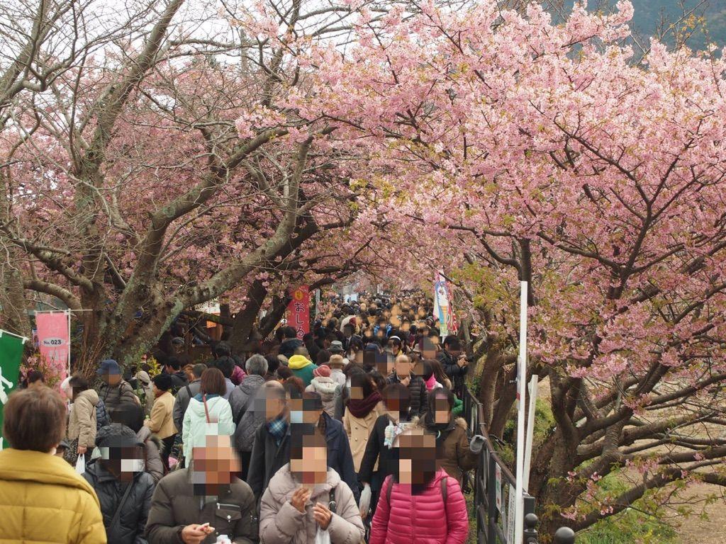 賑やかな河津桜まつり