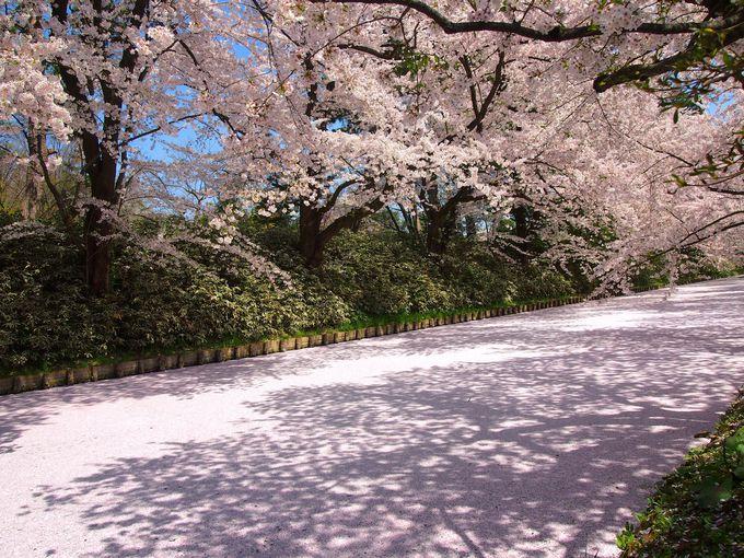 これぞ日本の絶景!桜の名所・弘前公園「弘前さくらまつり」