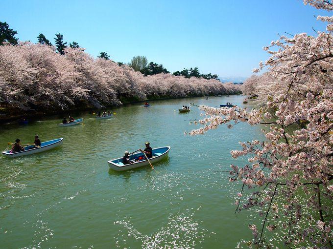 日本三大桜の名所「弘前城」(青森)