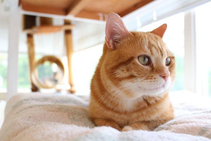 ねこグッズを揃えて真の猫マニアに
