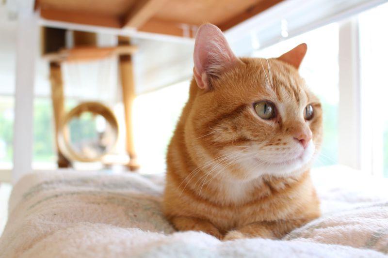 猫カフェの先駆け!?伊豆高原の隠れスポット「ねこの博物館」