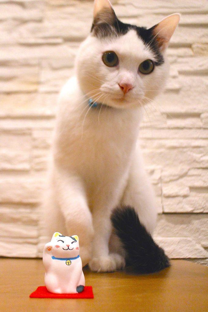 珍しい!招き猫の絵付け体験