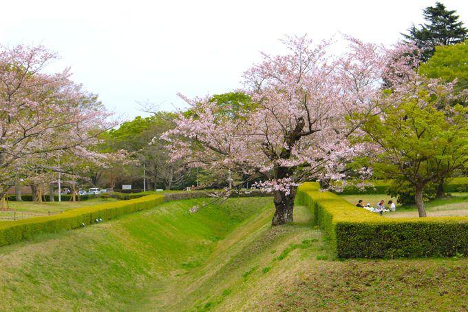 佐倉の桜はインスタ映え間違いなし!