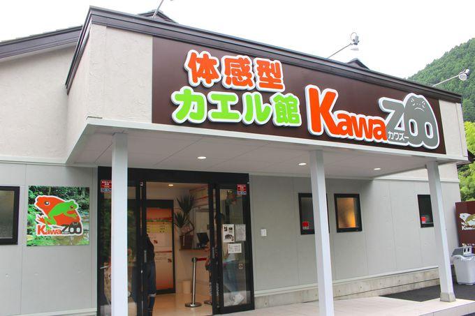 そこはカエルパラダイス!体感型カエル館KawaZooとは?