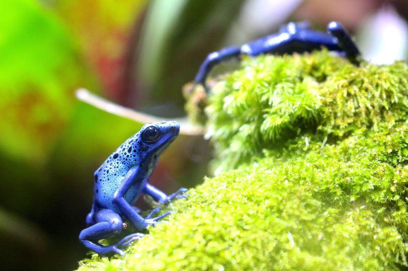 静岡県河津町に爆誕!話題の「体感型カエル館KawaZoo」がオススメ