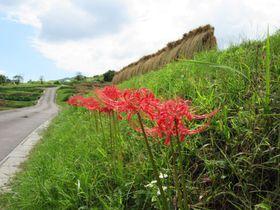 日本の原風景がここに!棚田で有名な長野・姨捨の楽しみ方