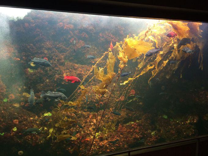 藻が主役?に仰天!「海藻の林」カリフォルニアの海はこんなに美しい