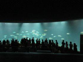 水槽に鳥がいるっ!東京「葛西臨海水族園」仰天スポット5選