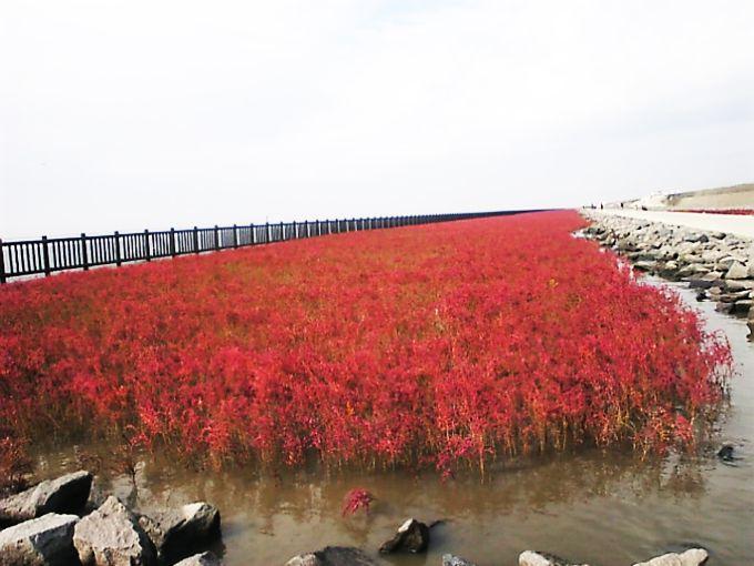 海にレッドカーペットが出現!海水ひたひた「干潟よか公園」