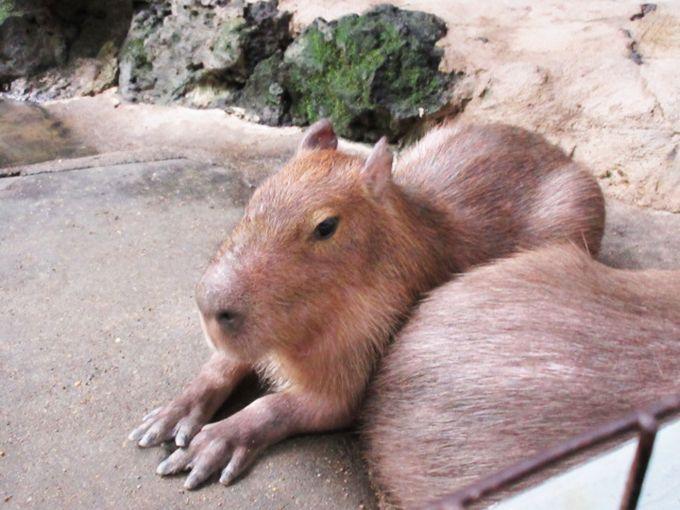 草津で動物とふれあうならココ!「草津熱帯圏」