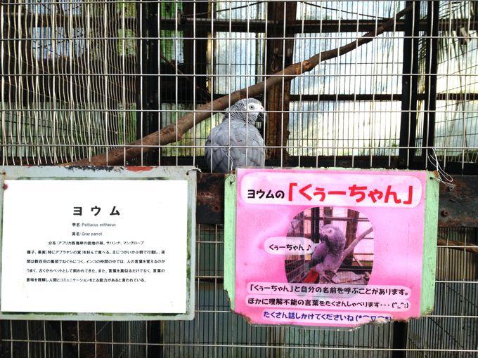 ふれあい度★★☆☆☆ 人語を理解!?鳥類代表「ヨウム」