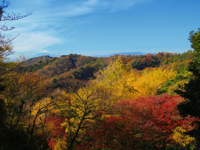 まずは「見下ろす紅葉」!尾根から黄金の森に向かって降りてゆこう
