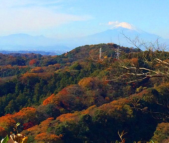 「鎌倉アルプス」からの眺望は抜群!天園ハイキングコース