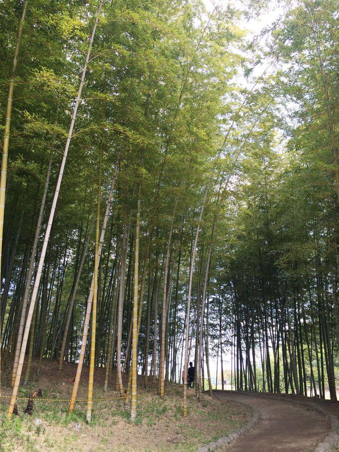 このメリハリが魅力のひとつ!心落ち着く日本庭園や竹林など