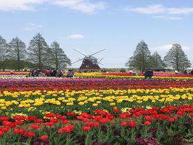 お花ぎっしり!千葉「あけぼの山農業公園」チューリップ花壇は見ごたえ抜群