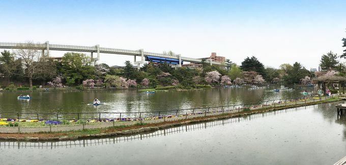 千葉公園は風光明媚な都市公園・モノレール直結がうれしい!