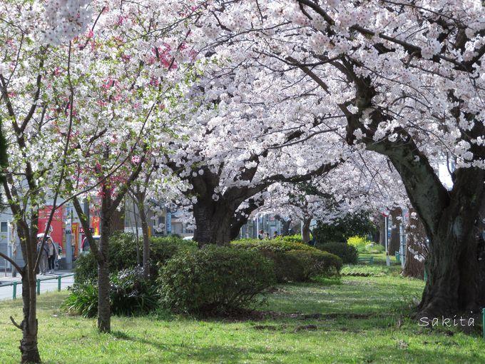 最寄りの新検見川駅からすぐ「花見川グリーンベルト」