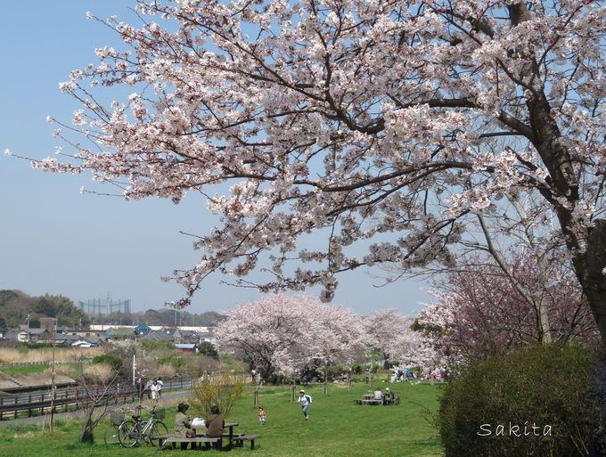 花見川千本桜緑地は、のんびり出来る憩いの場