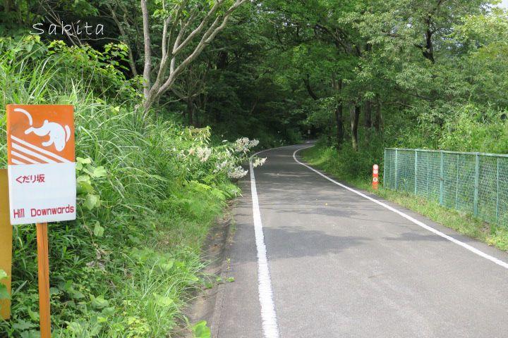 3000株のヤマユリが涼やか!自生地を自転車で巡ろう!