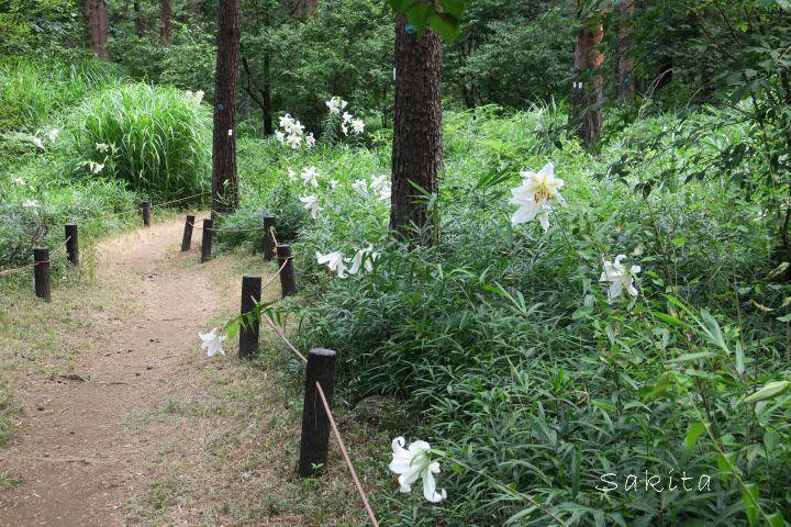 園内一の花数を誇る中央コース「やまゆりの小路」