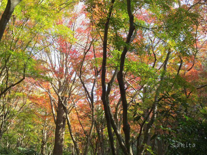 通年で楽しめる名所「獅子舞谷」夏と秋を見比べてみよう